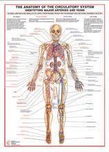 Medical Charts - Just Charts