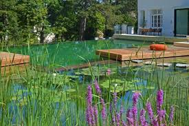 Natural looking in ground pools Residential Bathing Beauty Elementalgreen Natural Swimming Pools 101 Hgtv