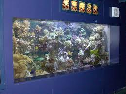 fish tank lighting ideas. Modern Blue Nuance Of The Large Fish Tank That Has Warm Lighting Inside Can Add It Ceramics Tile Room Ideas
