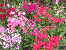 flowers for garden. So For Your Reference Purpose, We Have A Few Useful Tips That Will Help You In Getting Lovely Flower Garden. Flowers Garden S