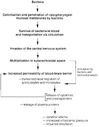 Pathophysiology Of Bacterial Meningitis The Pathophysiology