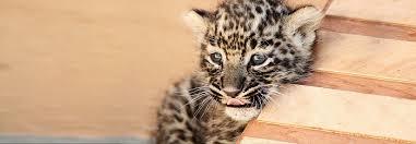 Всемирный фонд дикой природы: за живую планету!