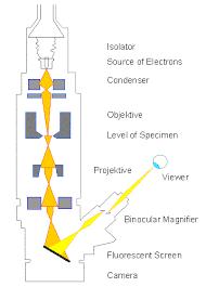 Tem Microscope Botany Online Microscopy Electron Microscopy
