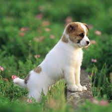cute-images-of-dogs-and-puppies ...