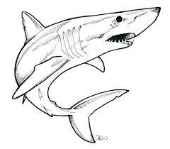mako shark drawing. Unique Mako Mako Shark  Google Search Inside Mako Shark Drawing Pinterest