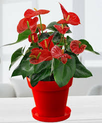indoor plants help in transmitting positive vibes from the environment and also improves the aura of your home by creating an