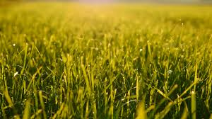 grass field background with flowers. Field Of Green Grass Background. Farming Harvesting Ecology Scene. Vibrant Vivid Stock Video Footage - VideoBlocks Background With Flowers E