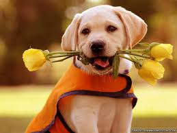 6 Spring Flowers That Are Toxic For Dogs - Petswelcome.com