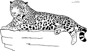 Realistic Animal Jaguar Coloring Pages Coloring Pages Pinterest