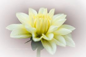 Afbeeldingsresultaat voor bloemen