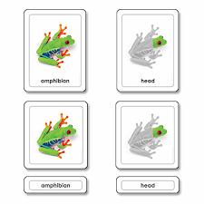 Parts Of A Frog Parts Of A Frog Amphibians