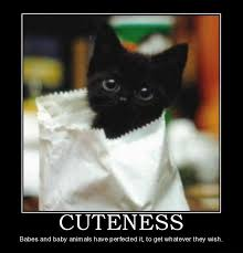 cute kittens quotes for kids. Perfect Quotes Cute Kitten Throughout Kittens Quotes For Kids K