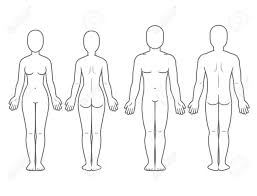 Male And Female Body Front And Back View Blank Human Body Template