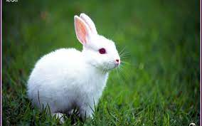 Rabbit Wallpapers Wallpaper Cave Love ...