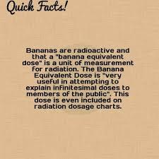 Banana Equivalent Dose Chart Quick Fact Bananas Are Radioactive And That A Banana