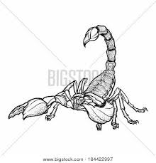 detailed realistic scorpio drawing isolated on white background tattoo design zodiac sign concept art