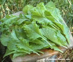 garden greens. Mustard Greens, Leafy Nutrient Dense, Garden, Vegetable Garden Fresh Greens E