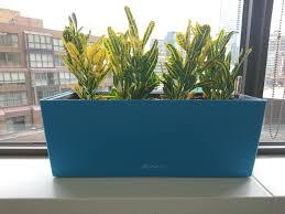 modern office plants. home officeoffice plants bananacroton or modern new 2017 design ideas officeig office plant