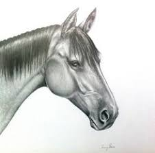 horse head drawing. Delighful Head Print  Horse Head Drawing In Graphite Drawing Drawings  Pencil Drawings Intended T