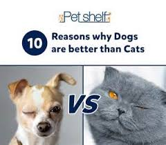 why are dogs better than cats clicky pix dogs are better than  why cats are better pets than dogs essay turbofan vs turbojet essays