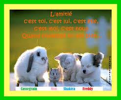 Citation Amitié Animaux Webwinkelbundel