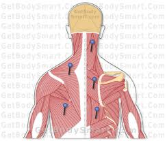 Their partner website has animated text narrations and quizzes to help you study the structures and functions of the anatomical systems. Get Body Smart Muscular System Medical Careers Anatomy And Physiology