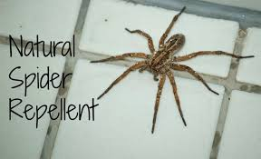 natural spider repellent guaranteed to work