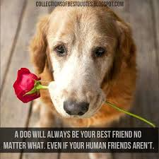 Quotes About Pets And Friendship Gorgeous Quotes About Dogs And Friendship Entrancing Quotes About Friendship