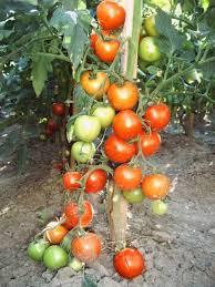 Image result for agricultura poze