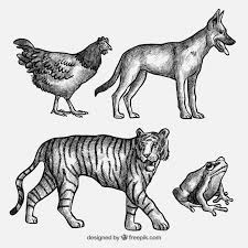 Sketches Animal Collection Of Animal Sketches Vector Free Download