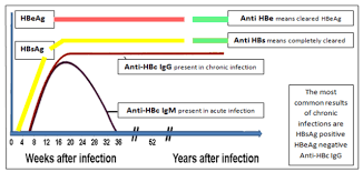 Hep B Chart Acute Hepatitis How To Clear