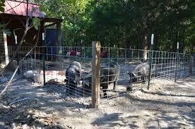 Pig Enclosure Design Building A Pig Pen With Hog Panels J J Acres