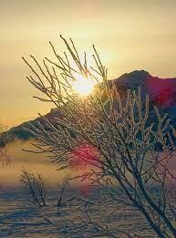 شروق الشمس ، فجر ، صباح ، الصقيع ، شتاء ، ربيع ، لين ، الأشجار ، شمس ،  الصباح الباكر ، عند الفجر