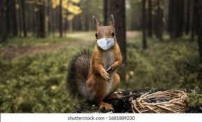 Squirrel Mask Images, Stock Photos & Vectors   Shutterstock