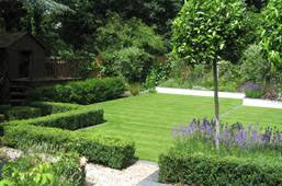Small Picture Bay standards planted within box edged beds and lavender Or they