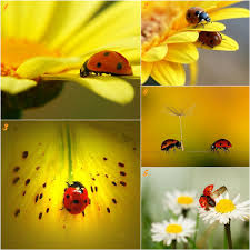 Ladybug Bedroom Decor 17 Best Images About Lots And Lots Of Ladybugs On Pinterest