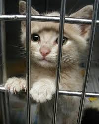 animal shelter kittens. Contemporary Shelter Five Reasons To Adopt A Shelter Animal For Kittens N