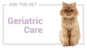 Q: Is it safe to put an 11-year-old cat under anesthesia? - Healthcare For  Pets