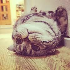 癒しポーズの猫