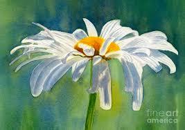 shasta painting shasta daisy blossom with blue background by sharon freeman