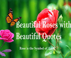 Beautiful Roses With Love Quotes