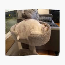 """Fat Cat Sleeping """" Sticker by Chantal15   Redbubble"""