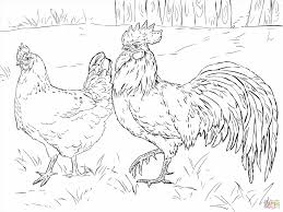 Small Picture Sits On Eggs Free Printable Pages Hen Hen Coloring Page Sits On