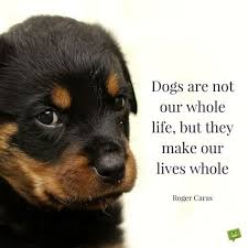20 Dog Quotes For People Who Love Dogs Dogs Hunde Coole Hunde
