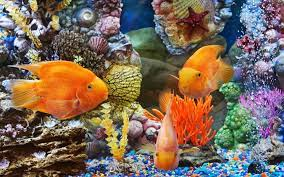 Fish Wallpaper Hd For Mobile Free ...