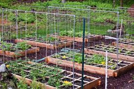 raised bed gardening is it the way to