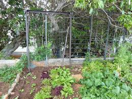 Kitchen Gardeners How To Start A Small Garden In Your Backyard Intended For Your