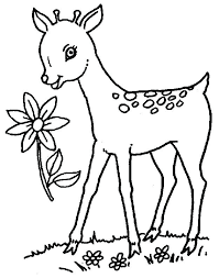 Coloring Pages Kids N Fun Drawings For Baby Deer Pictures Frozen