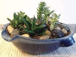 easy indoor succulent rock garden