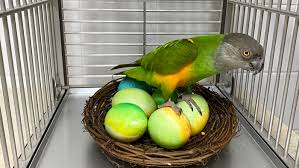 trained parrot articles about